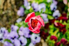 Spring-0108-3.jpg
