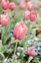 Springtime w 4.jpg