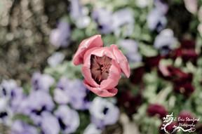 Springtime w 5.jpg