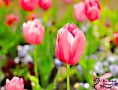 Spring-0104-2.jpg