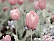Springtime w 3.jpg