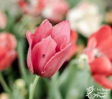 Springtime w 2.jpg