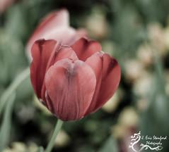 Springtime w 1.jpg