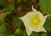 Cotton - White.jpg