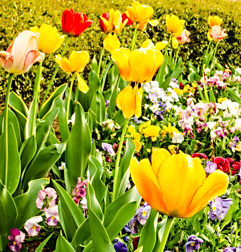 Spring - J Eric Stanford.jpg