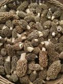 Morel Mushrooms.jpg