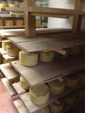 Aging cheese.jpeg