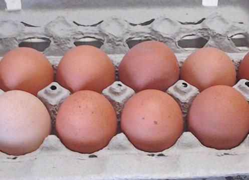 Free Range Brown Eggs - GHF