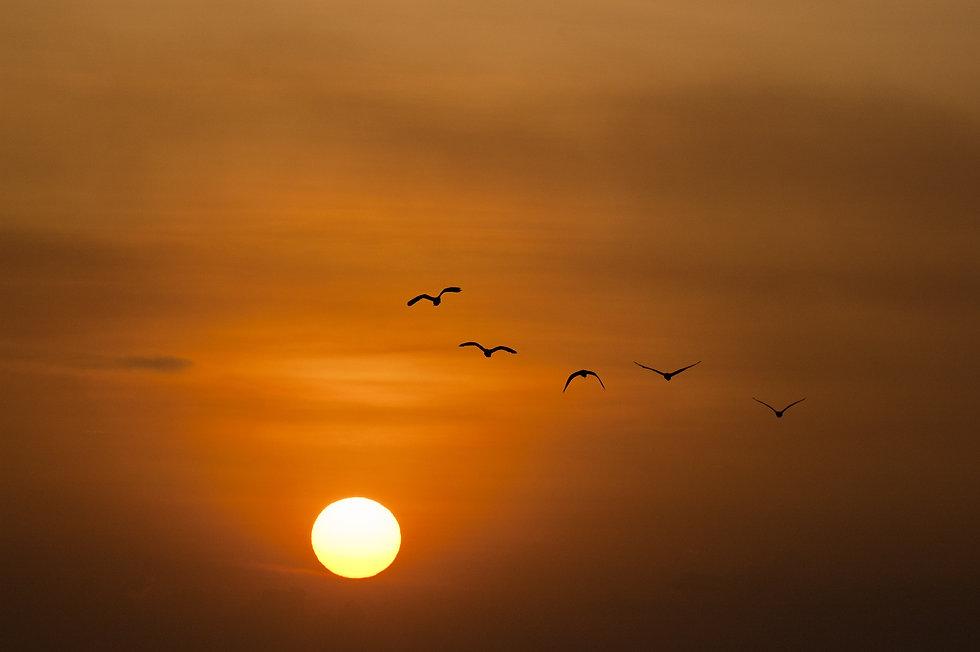 sunset-600095.jpg