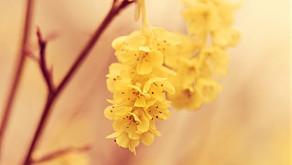 Le rituel du grand ménage de printemps