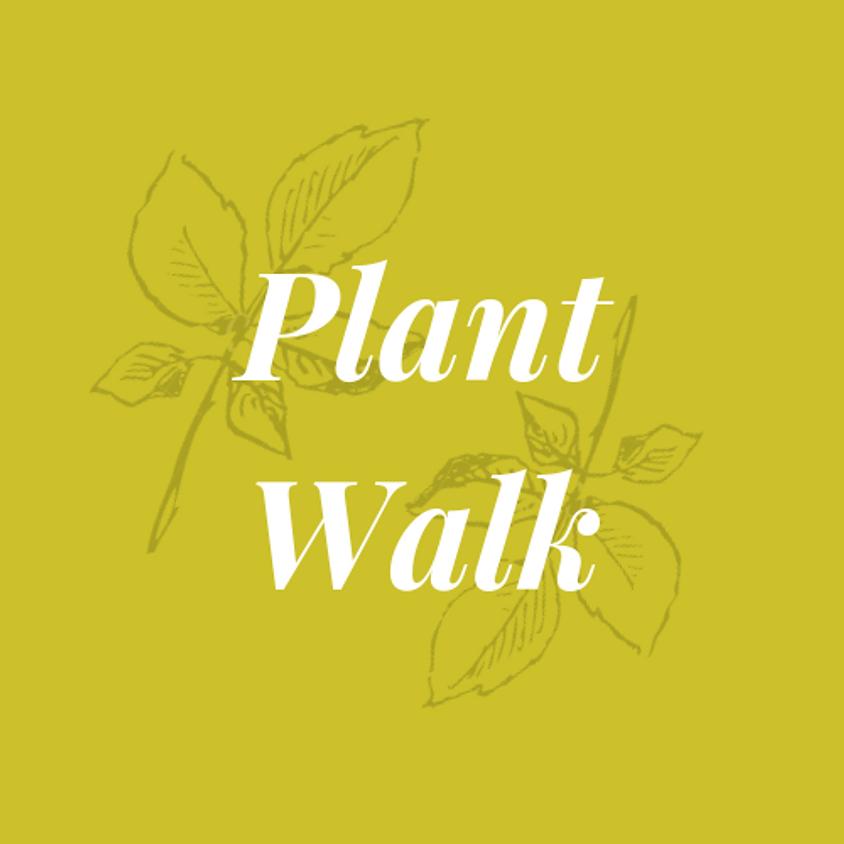 Plant Walk with Amy Stone