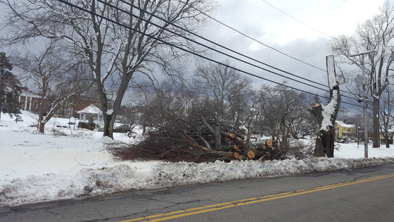 Storm Takes Landmark Trees