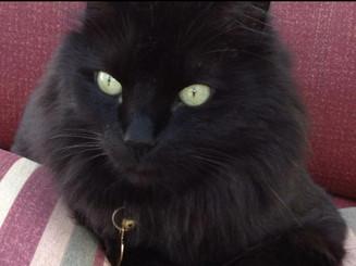 blk kitty2.jpg
