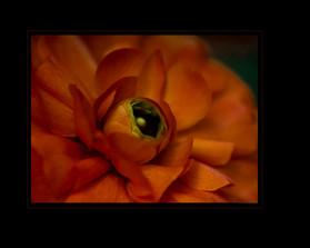 """Orange You Beautiful"" by Sharon Lobel"