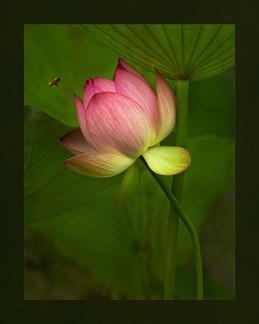 """Summer Blossom"" by Angela Chen"