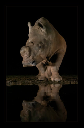 """""""Mirror Mirror"""" by Mel Carll"""