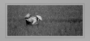"""Harvest Morn"" by John Powers"