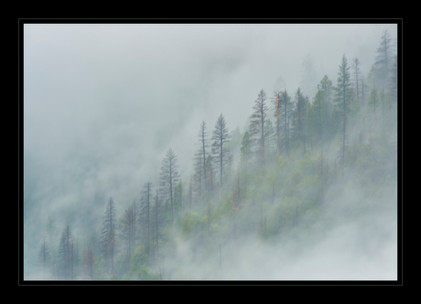 """""""Trees in the Mist"""" by Mel Carll"""