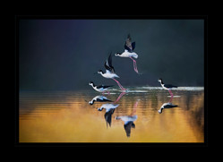 """""""Ballet for the Birds"""" by Bobby Tan"""