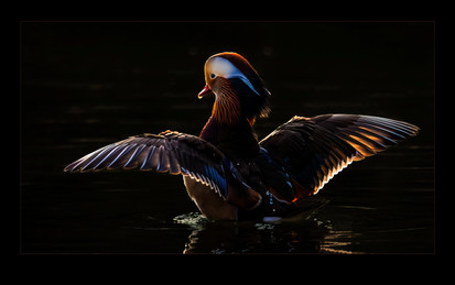 """""""I Am No Ugly Duckling"""" by Bobby Tan"""