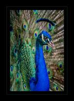 """Blue Beauty"" by Nikki Washburn"
