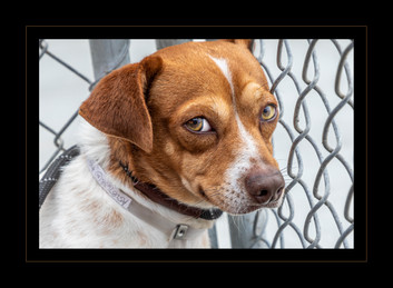 """""""Shelter Dog Waiting for Adoption"""" by Gary Parsons"""