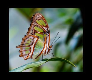 """""""Delicate Beauty"""" by Sharon Lobel"""