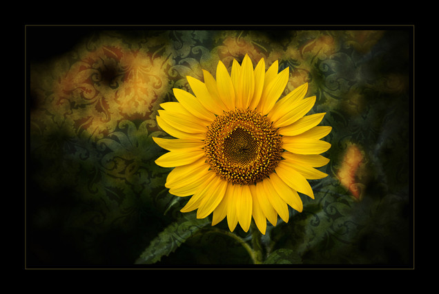 """Petals and Paisley"" by John Powers"