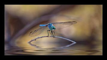 """""""Dragonfly Art"""" by Mel Carll"""