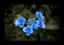 """Blue Sisters"" by John Powers"