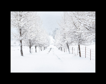 """Spectacular Snowfall"" by Ira Mintz"