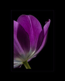 """Springtime Beauty"" by Sharon Lobel"
