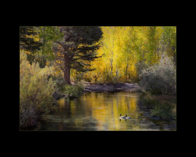 """""""On Golden Pond"""" by Ira Mintz"""