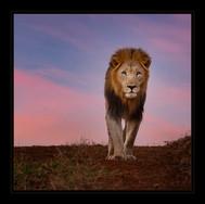"""King of Kings"" by Mel Carll"