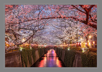 """""""Cherry Blossoms At Sunset"""" by John Powers"""