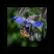 """In the Pursuit of Pollen"" by Nikki Washburn"