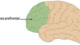 Neurobiología del Trauma.