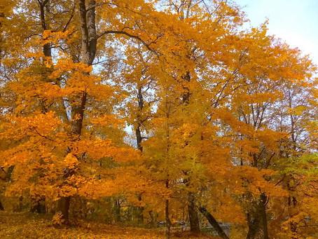 Золотая осень ставит рекорды