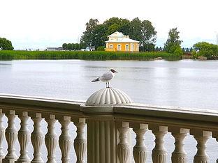Вид на Залив от дворца Монплезир