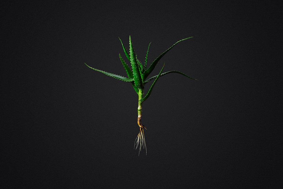 NaturalDoc_Aloe.jpg