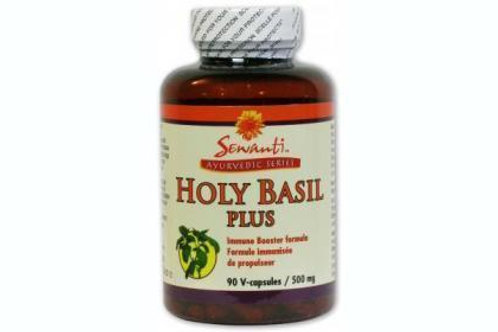 Holy basil plus