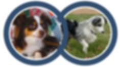 DogVIOLET_ breeding.png