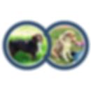 _Dog CASSIE_ breeding.png