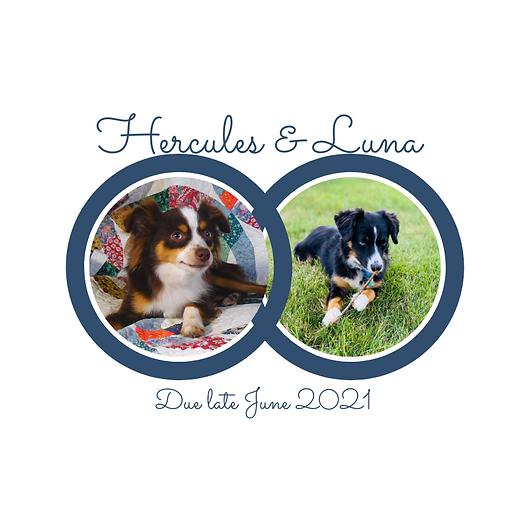 Hercules&Luna.png