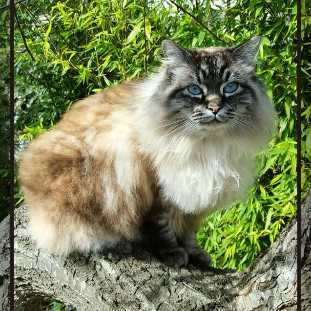 My current cat, Kahlua