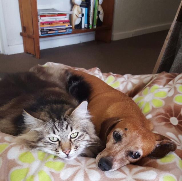 Gizmo & Maia: passed away already