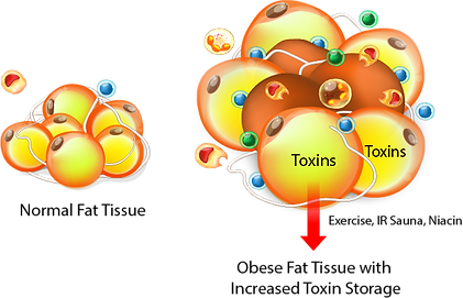 Fat and Toxins.png