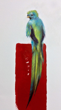 Quetzal 11x17 Oil on Paper  2017