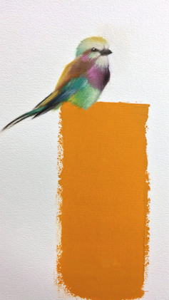 Lilac Breasted Roller  11x17  Oil on Paper  2017