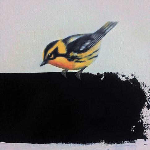 Blackburnian Warbler 10x12  Oil on Canvas  2017